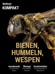 Spektrum Kompakt: Bienen, Hummeln, Wespen - Sechsbeiner mit Charakter