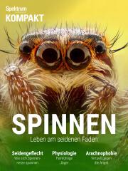 Spektrum Kompakt: Spinnen - Leben am seidenen Faden