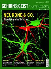 Gehirn&Geist: Basiswissen Teil 4